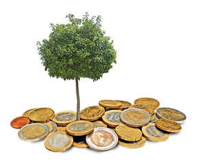 Citrus tree growing from coins