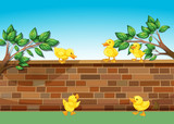 A wall with five ducklings