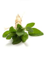 Sage - Salvia