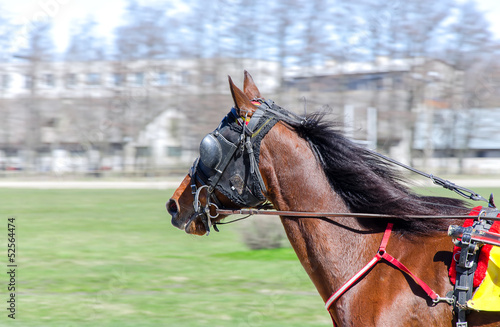 Harness racing. Racing horse in motion