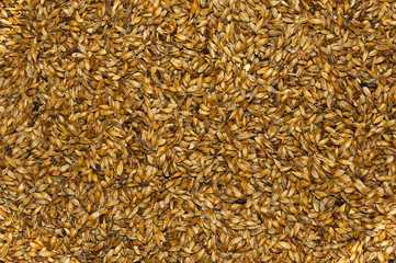 Malt closeup