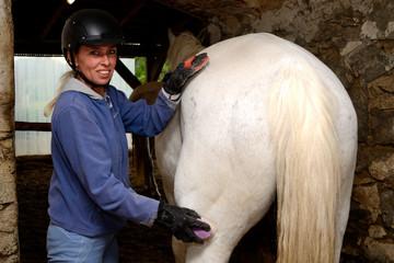 Reiterin striegelt Pferd
