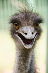 Emu 3