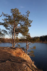 Pines on the shore of Lake