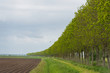 Row of trees along a plowed field in spring