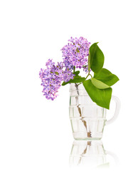 Lilac flowers in glass