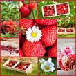 Strawberries collage - Erdbeeren collage
