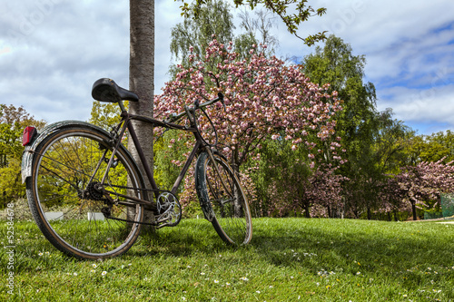 canvas print picture Old Bicycle in a Park in Spring