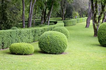 Arbuste décoratif