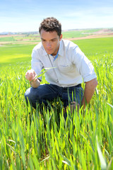 Farmer kneeling in wheat field