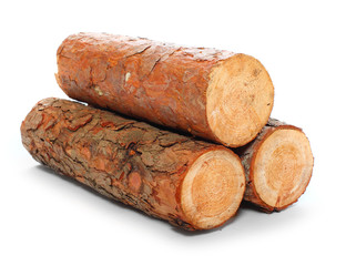 Cut log fire wood from pine tree.