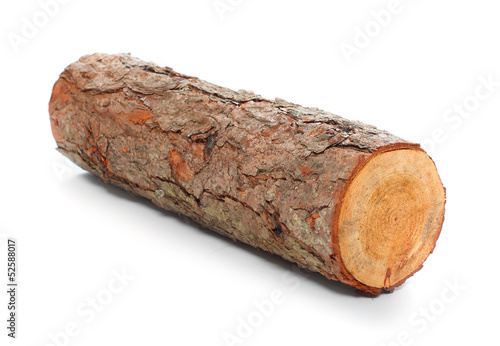 Cut log fire wood from pine tree.