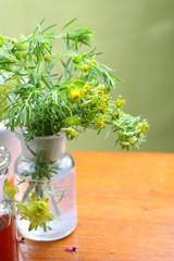 Heil- und Giftpflanze Euphorbia cyparissias