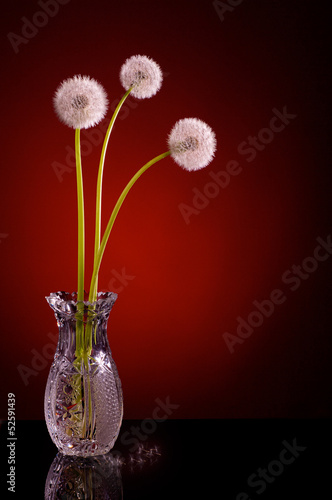 three dandelion blowballs red