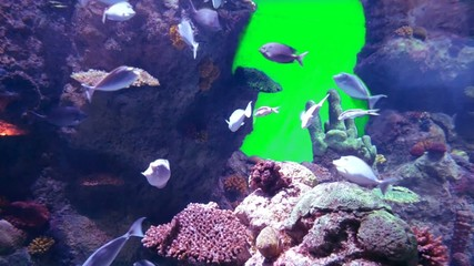 aquarium life with green screen