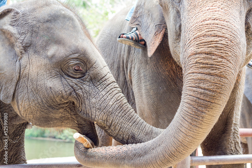elephants with mahout