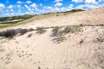 sand dunes in Holland