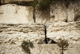 Wailing Wall Close Up