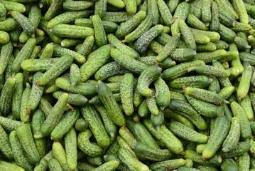 biogurken