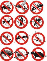 common household pest icon
