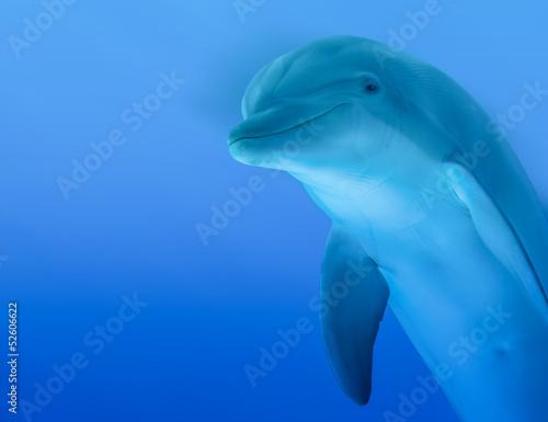 Tuinposter Dolfijn Delfino curioso