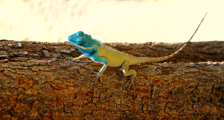 Bright color lizard (pangolin) on a tree