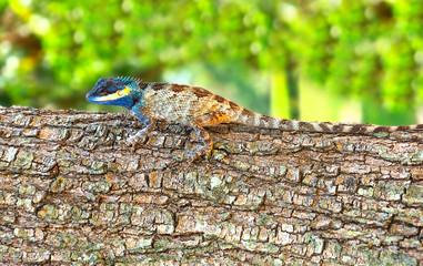 Bright color lizard (pangolin) on a tree