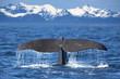Leinwandbild Motiv Whale tail