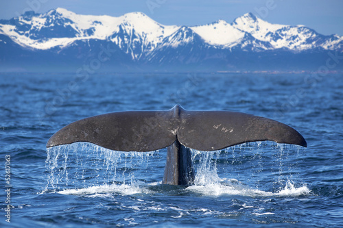 Whale tail - 52617063