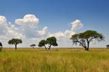african landscape, - Fine Art prints