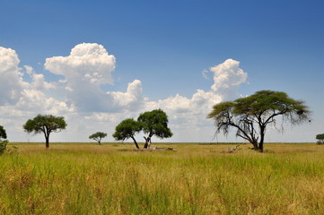 african landscape,