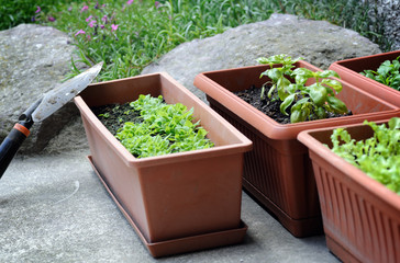boxes with seedling