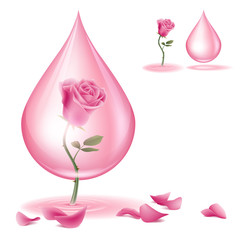 dripping of rose oil
