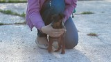 Miniature Pinscher dog in the park