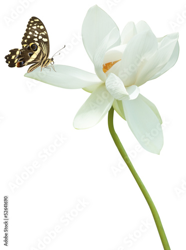 papillon sur fleur de lotus