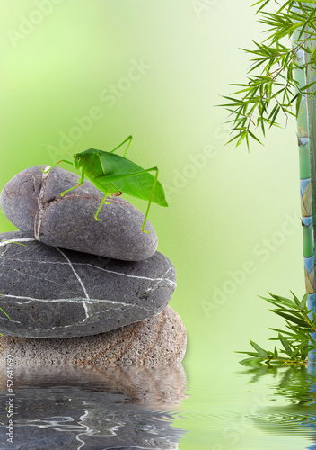 décor champêtre asiatique