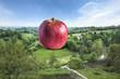 Paysage de Campagne BIO Pomme