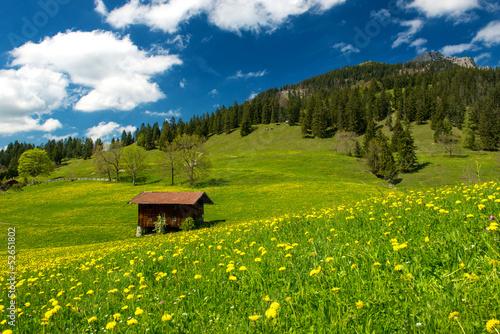 Fototapeten,alm,alpen,landschaft,wandern