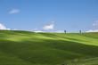 campo di grano con cipressi e cielo blu,Toscana,Italia
