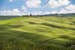 campo di grano verde e cielo blu,Toscana,Italia