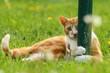 Rote Katze umgreift Pfosten
