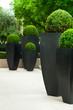 nobler Garten einer Wohnung in Paris, Frankreich