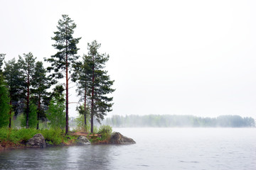 Sea with conifer trees in fog