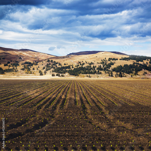 American Countryside Field In Colorado