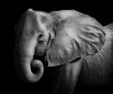Elephant (Artistic Processing)