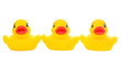 yellow rubber duck-triple_on white