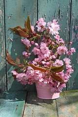 Beautiful japanes cherry flowers in the vase