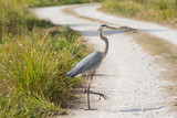 Why'd the Heron Cross the Road