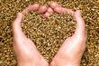 Leinwandbild Motiv Hemp seeds held by woman hands shaping a heart on a hemp seed background