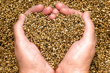 Hemp seeds held by woman hands shaping a heart